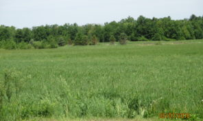 000 Worden Road, Stanley  40 Acres Vacant Land w/ 30 Tillable